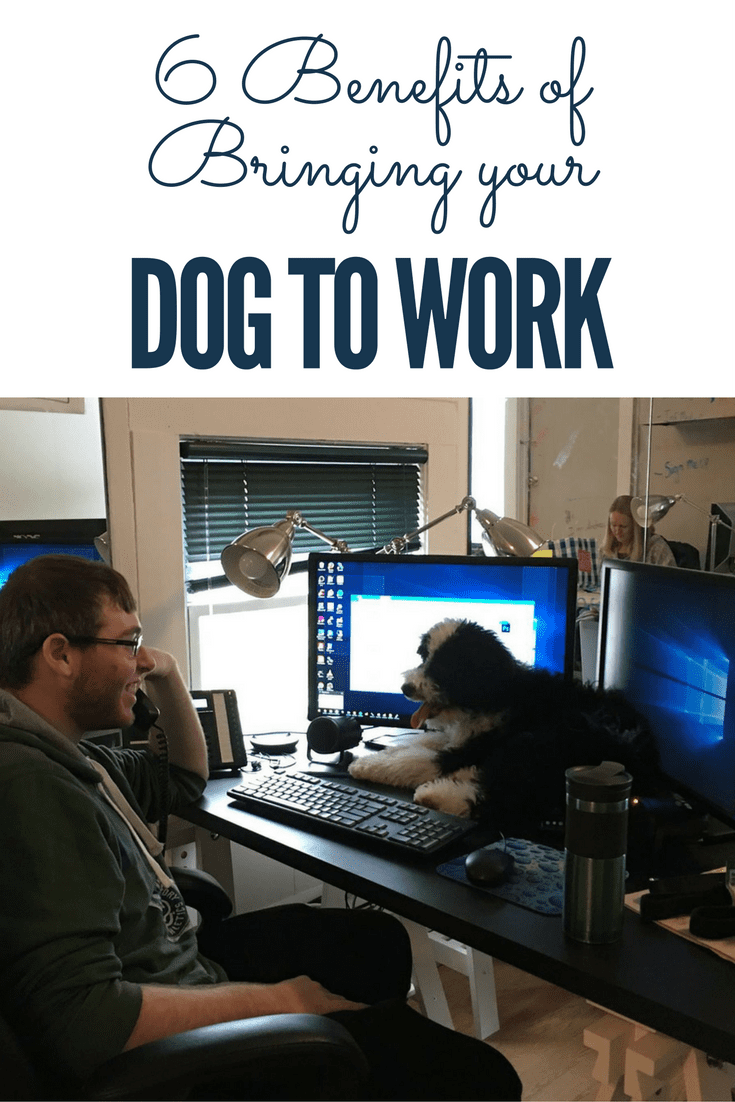 6 benefits of bringing your dog to work