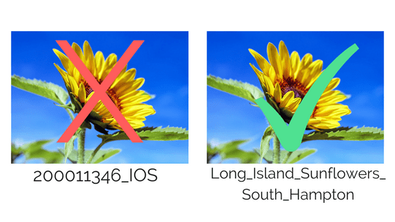 image title 200011346 IOS versus long island sunflowers south hampton